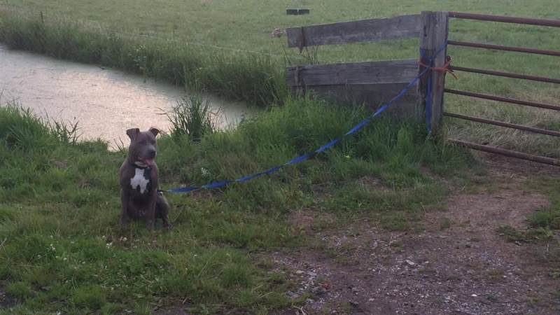 Dierenpolitie spoort eigenaar achtergelaten hond op