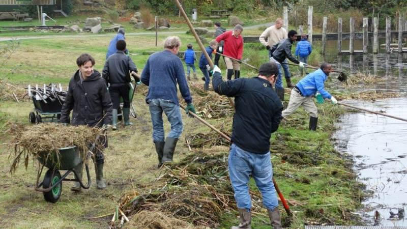 Begin het jaar goed: rietharken in Waterland-Oost