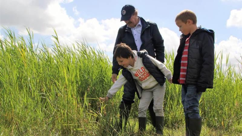 Ontdek, ruik en proef de eetbare planten in het Ilperveld