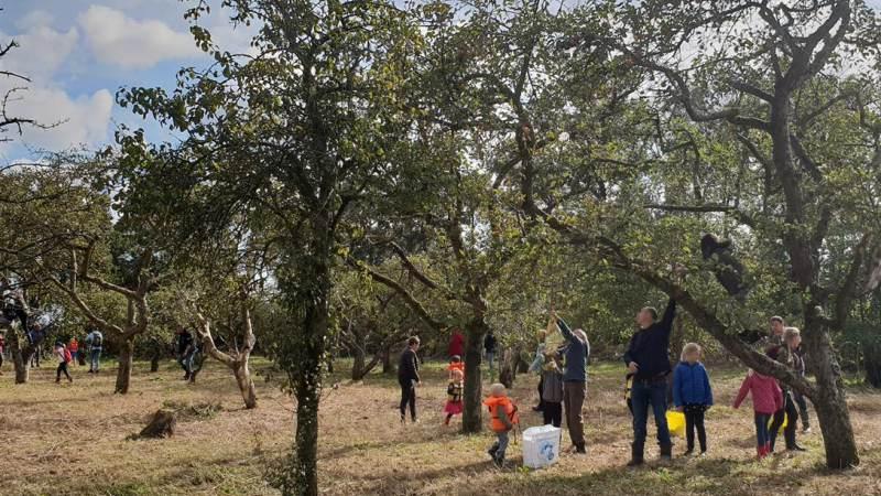 Kinderactiviteit: Appels plukken in Eilandspolder