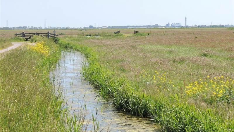 Natuur- en milieuorganisaties presenteren Actieplan stikstof voor Noord-Holland