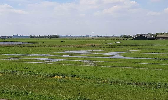 Vogels voor vee: provincie koopt landbouwbedrijf bij Uitdam