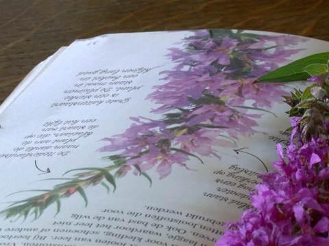 Marjolein Holtkamp schrijft boek 'Kruidentocht, op zoek naar wilde kruiden'