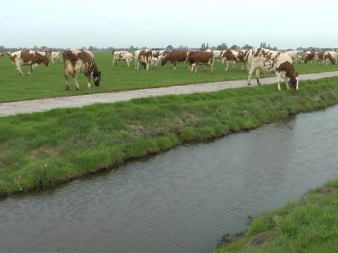 Koeien van Peter en Bertine Willig 'dansen' de wei in