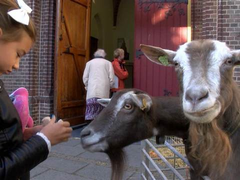 Dieren in het zonnetje gezet bij Dierendagviering in RK Kerk