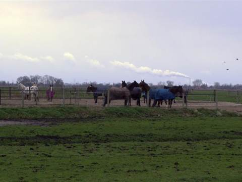 Stal Dobber in Zuiderwoude heeft paardenvirus