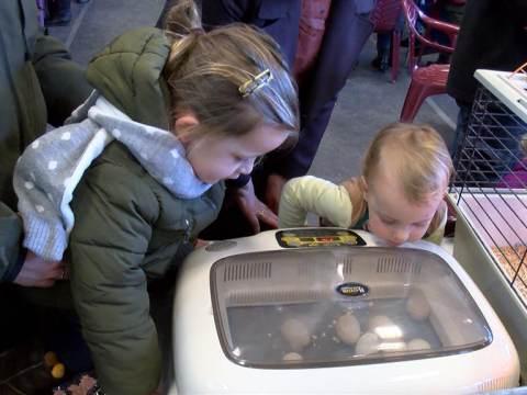 Kleindiertentoonstelling in Broek in Waterland