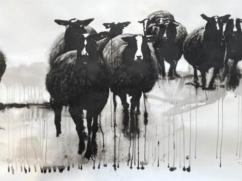 Kerk Zuiderwoude vol schapen
