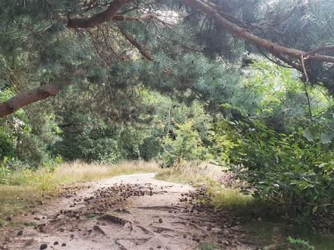 Verslag van dag 6 van Jesse's 15-daagse tocht langs het Pieterpad