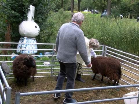 De schapen zijn hun vacht weer kwijt